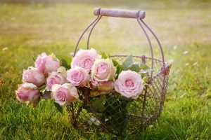Roses, Fleur, Bloom, Rose Rose, Fleur Rose